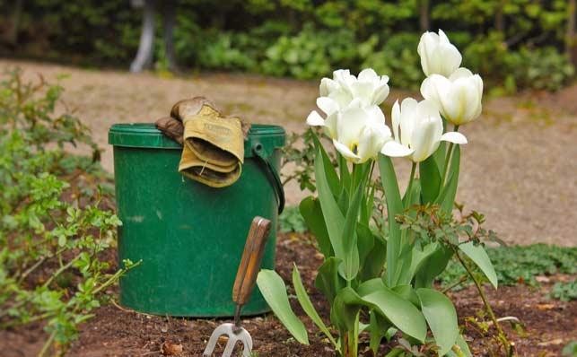 mantenimiento-de-jardines-web
